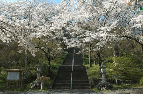 弘法山(さくら)