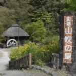 ヤマブキ開花情報(山吹の里歴史公園)