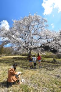 『大きな桜の木の下で』