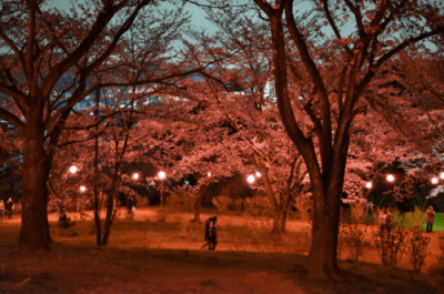 さくら山公園ライトアップ