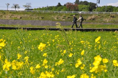 花の里おごせ健康づくりウォーキング大会