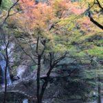 黒山三滝の紅葉状況