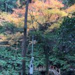 黒山三滝の紅葉情報
